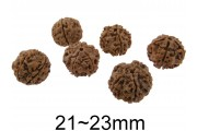 https://eurobeads.eu/37440-jqzoom_default/rudraksha-natural-size-2123mm.jpg